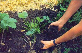 Se impulsa la Agroecología en Ecatepec